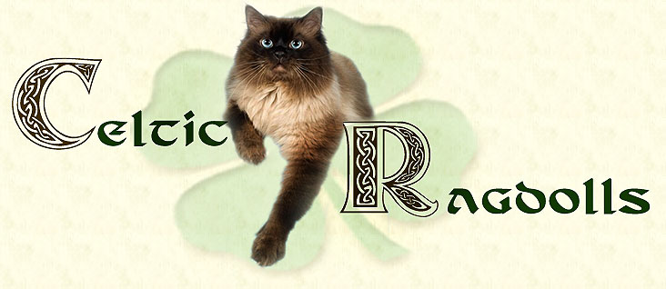 Celtic Ragdolls